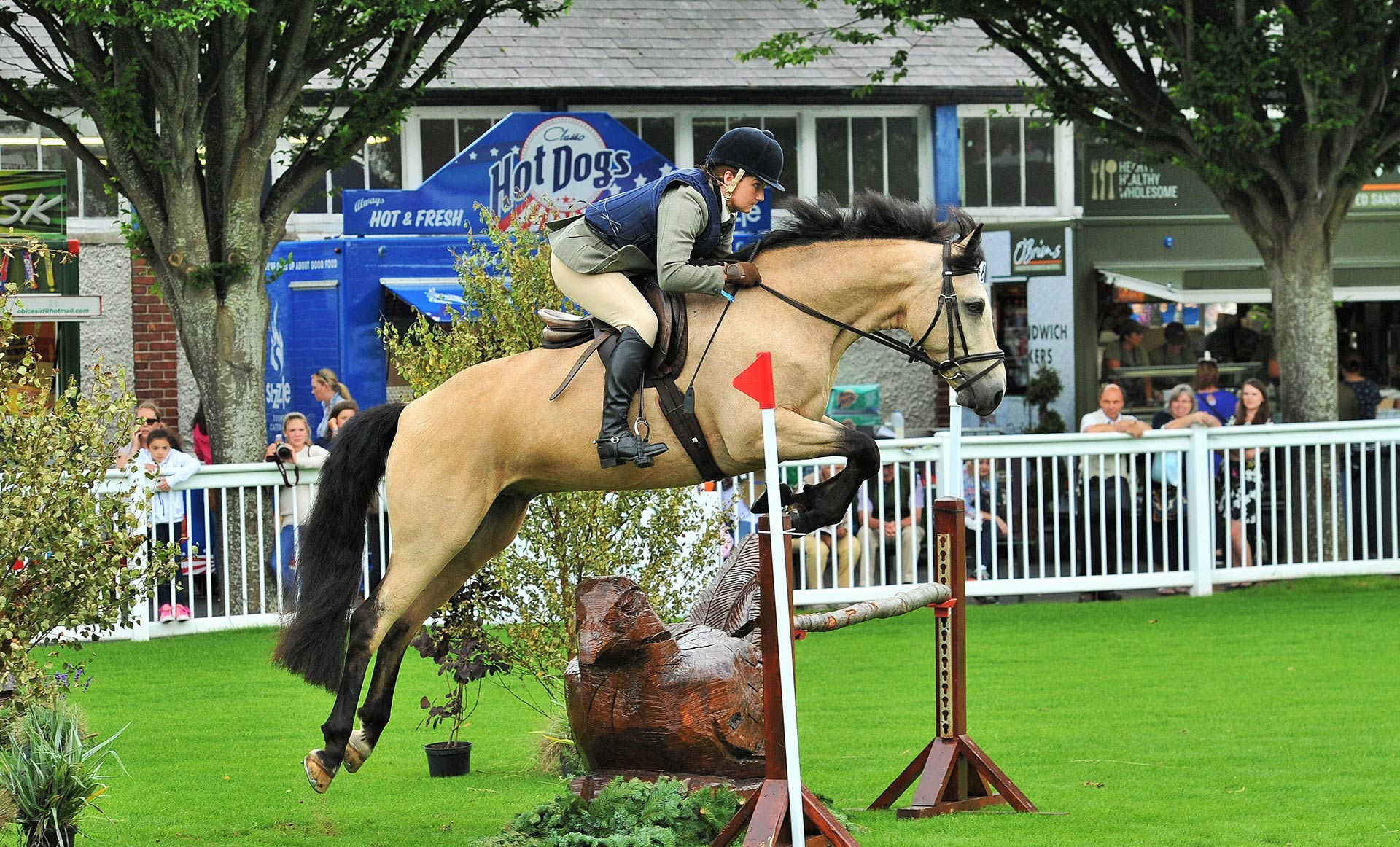 Connemara ponies ireland