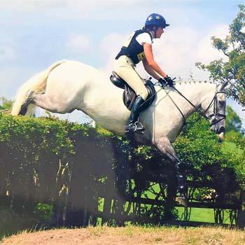 connemara pony national seller