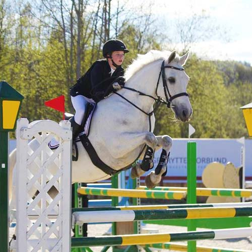 irish show ponies