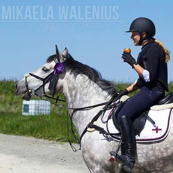 event ponies for sale ireland
