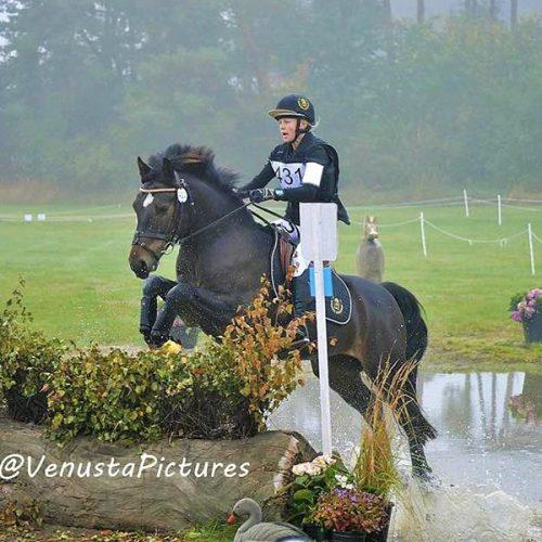 equestrian ireland