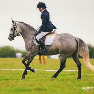 uphill paces pony