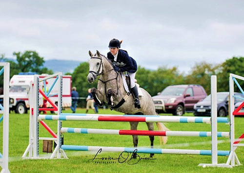 15 hh pony