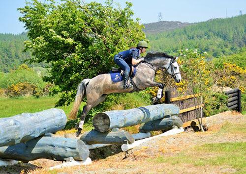 grey dun pony for sale